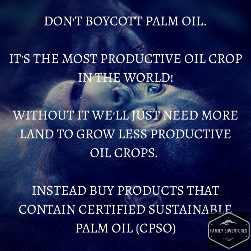 Palm oil | orangutan | protect the rainforest