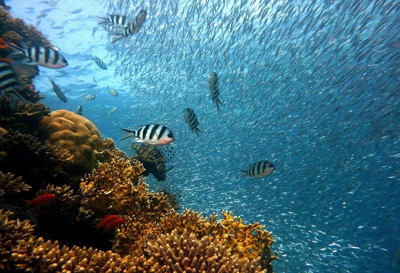 Coral reef | reef safe sunscreen