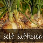 How To Be Self Sufficient | tips for being self sufficient in 2019!