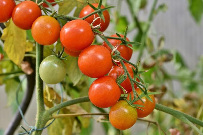 ethical organic seeds