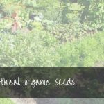 Buying Ethical Organic Seeds | best places to buy organic seeds