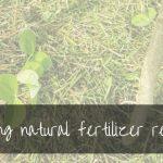 17 Organic Natural Fertilizers | DIY Fertilizer Recipes