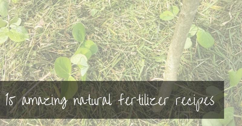 17 Organic Natural Fertilizers   DIY Fertilizer Recipes